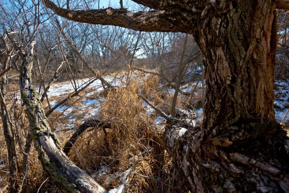 Through Trees at the Marsh Edge