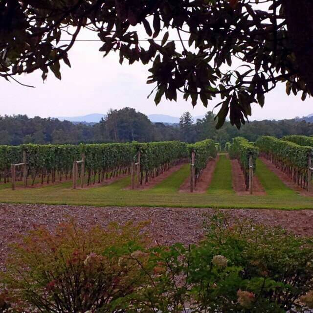 Enjoying peaceful time at a vineyard