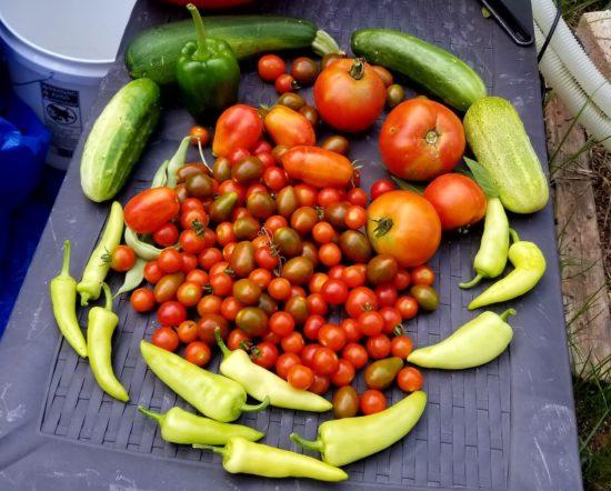 garden, food storage, survival, SHTF, survival gardening