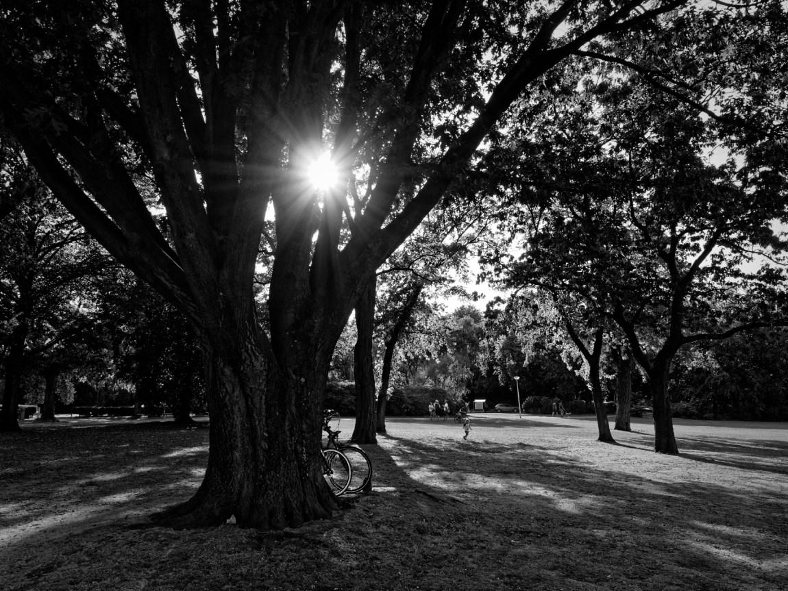 Behind the tree