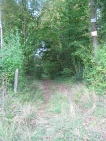 Royal Dragon's Wood
