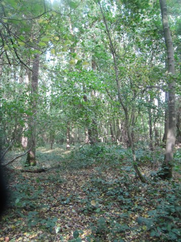 Shell holes are still evident in Trones Wood