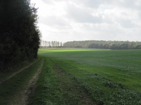Looking South from the northern tip of Trones Wood towards Bernafay