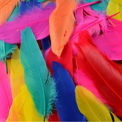 mixed-coloured-feathers
