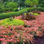 Looking Back: A Visit To Kingwood Center Gardens
