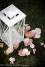 Pink petals spilling out of white lantern