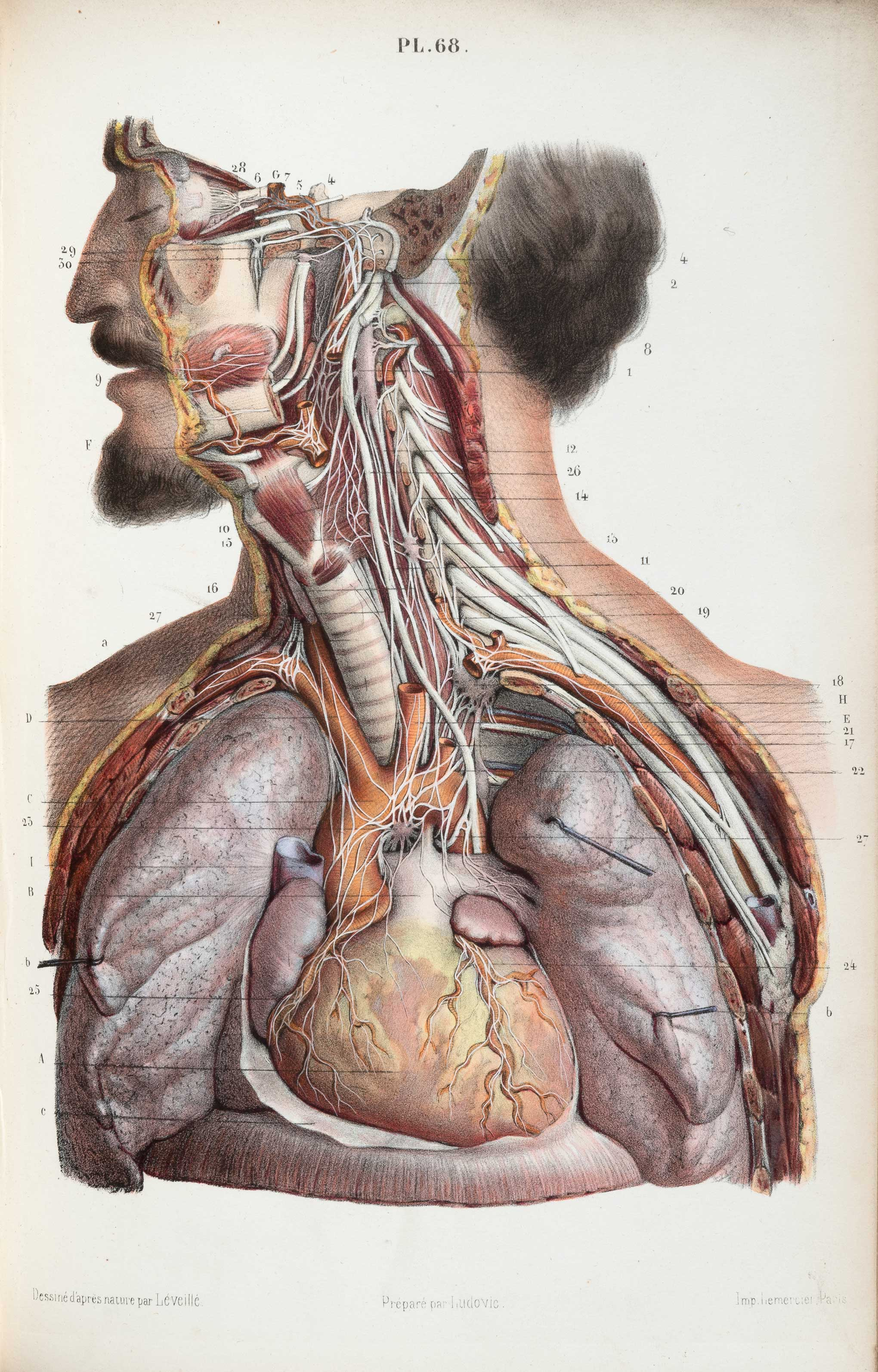 These Old Anatomical Drawings Are Worth Dissecting