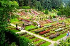 1859_web_roses_garden_002