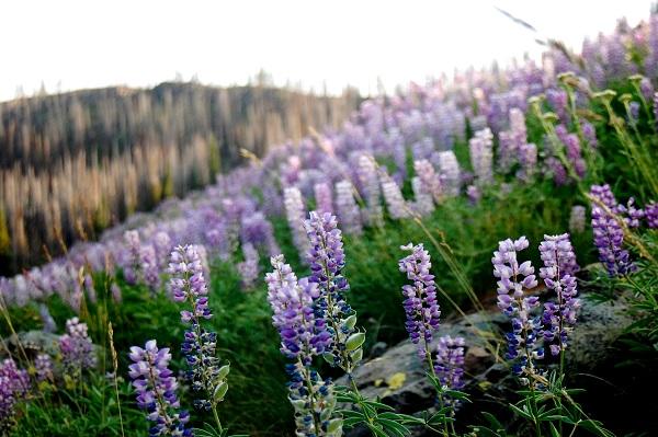 1859_wildflowers_stephanie_hinson_5