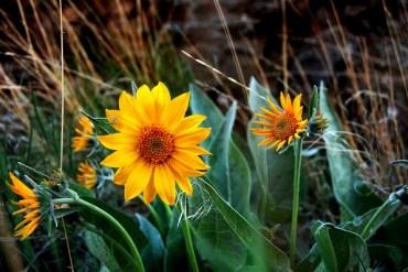 1859_wildflowers_stephanie_hinson_3