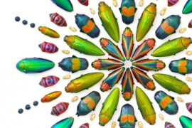 2010-Autumn-Oregon-Art-Artist-Willamette-Valley-Salem-Christopher-Marley-bug-insect-mosaic-1