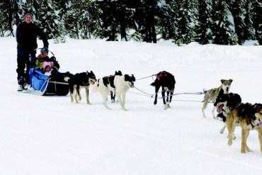 2010-Winter-Central-Oregon-Travel-Outdoors-Mt-Bachelor-dog-sledding-winter-snow