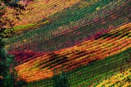 2011-Winter-Southern-Oregon-Travel-Outdoors-Wine-Roseburg-Reustle-Prayer-Rock-Vineyard