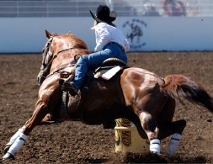 things-to-do-willamette-valley-st-paul-rodeo-oregon