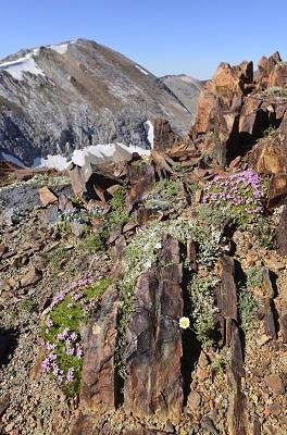May_June_2015_Wildflowers_Gallery_LeonWerdinger_002