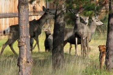 valerie-myers-shadow-deer-fence