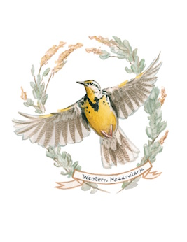 1859_Nov_Dec_2015_Feature-Birding_Karen_Eland_meadowlark