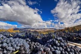 marc salvatore, oregon wine, oregon wineries, oregon winemaking