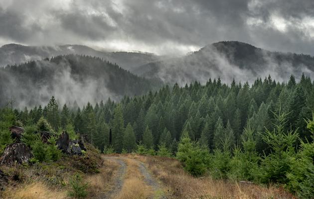 1859_Photo-of-the-Week_Jan-25_Alsea-Mountain-Oregon_Joan-Martelli_630x400