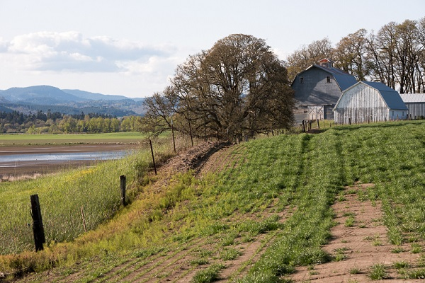 Krista Rossow, oregon wine country