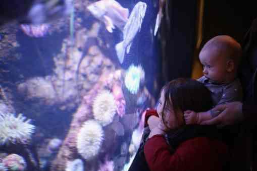 siblings enjoying the aquarium