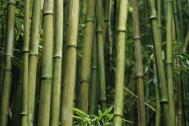 come-realizzare-una-canna-da-pesca-di-bambu_1d0ea40b9b0933bcd56e72e4851afdc7