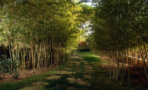 totally-bamboo-Landscape-Modern-with-bamboo-Bamboo-grove-bamboo-tree-framed-view-grass-lawn-path-pavers-privacy