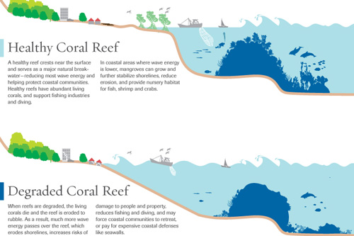 10 Benefits Coral Reefs