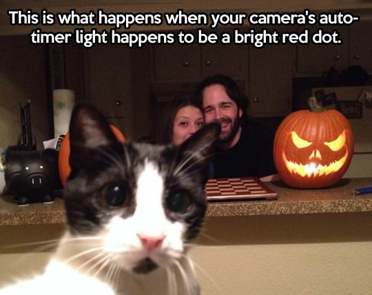 funny-cat-photo-auto-timer-light