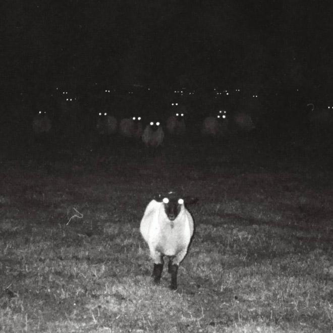 Creepy sheep standing in the dark.