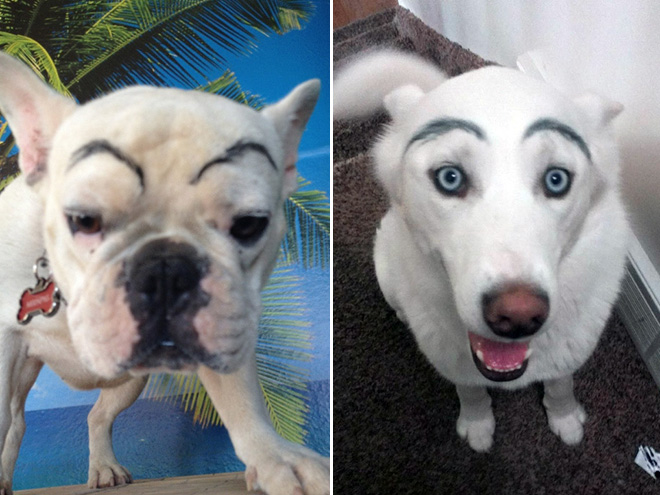 Dogs look great with makeup eyebrows.
