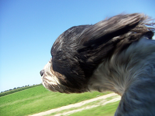 Wind vs. dog.