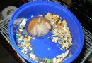 Behold! The World's Greatest Gallery of Hamster Butts!