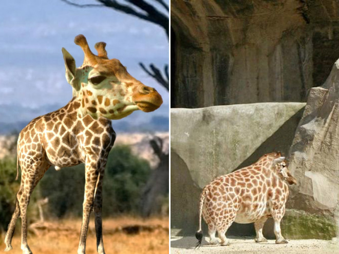 Animals are much funnier without necks.