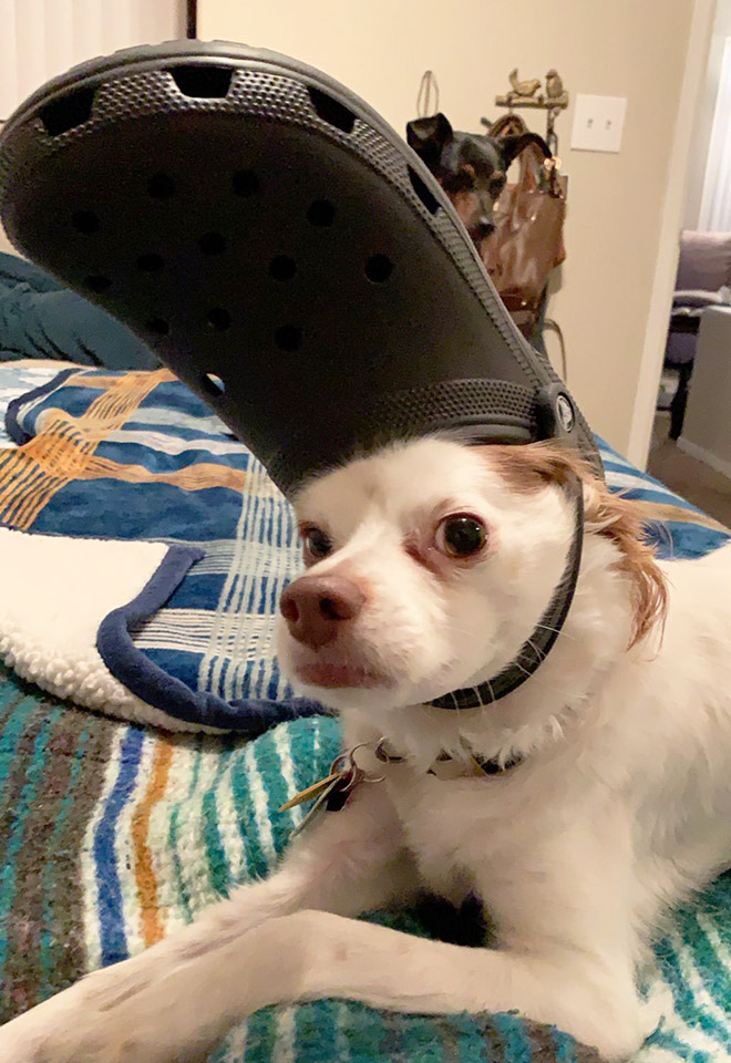 Beautiful Crocs hat.