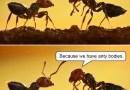 Why Ants Don't Get Coronavirus