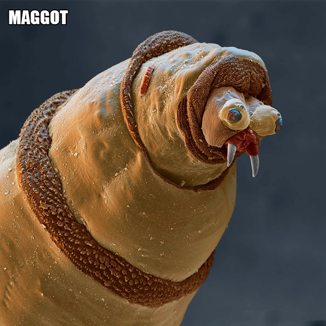 We are used to seeing big animals and things around us, but there's also a microscopic world around us...