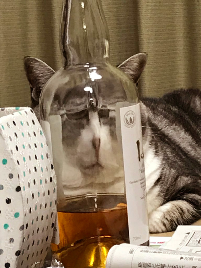 Cat hilariously distorted by glass.