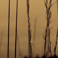Grass Nov.25/14