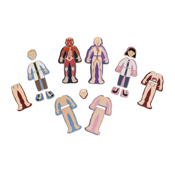 Human Anatomy Wooden Magnetic Dolls | Shure Products