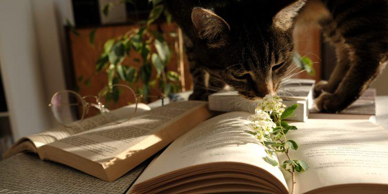 Carti de Citit in Casa: Ce am citit noi