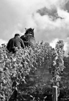philipponnat-chevalMKB_0063_1326