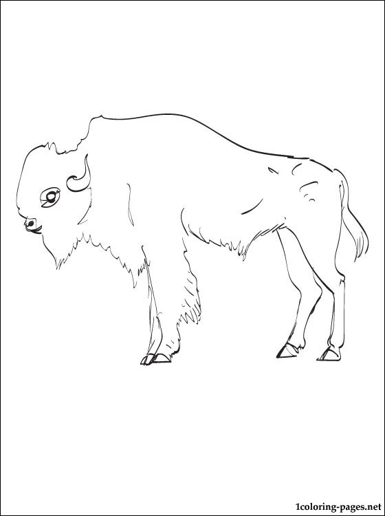 buffalo coloring page  coloring pages