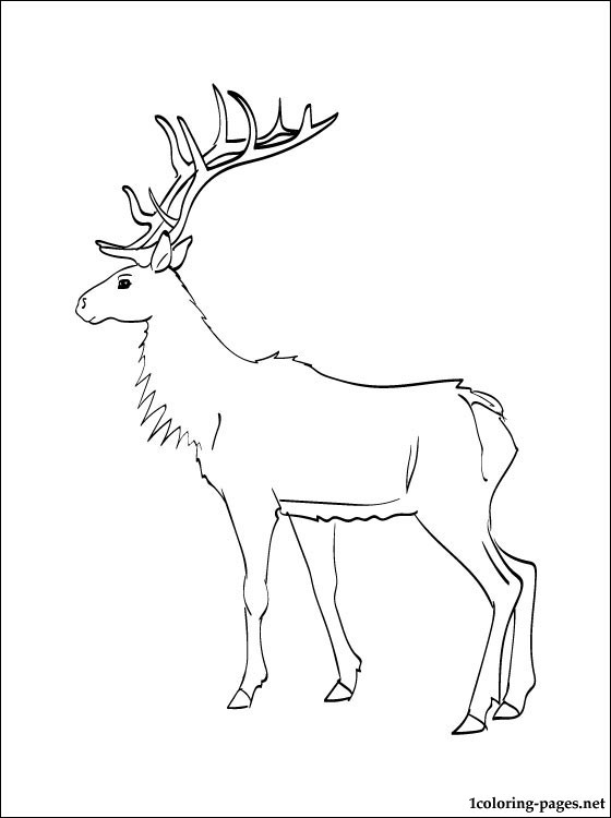 Coloring Page Elk Coloring Pages