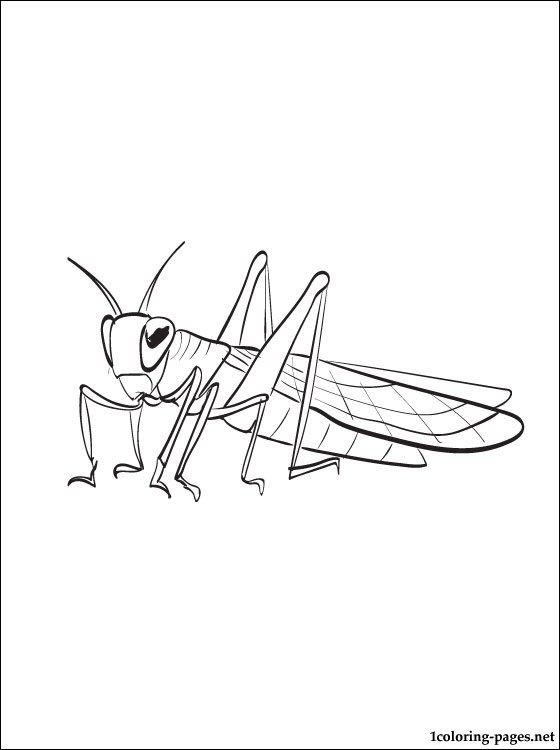 Locust Coloring Page To Print Out Coloring Pages