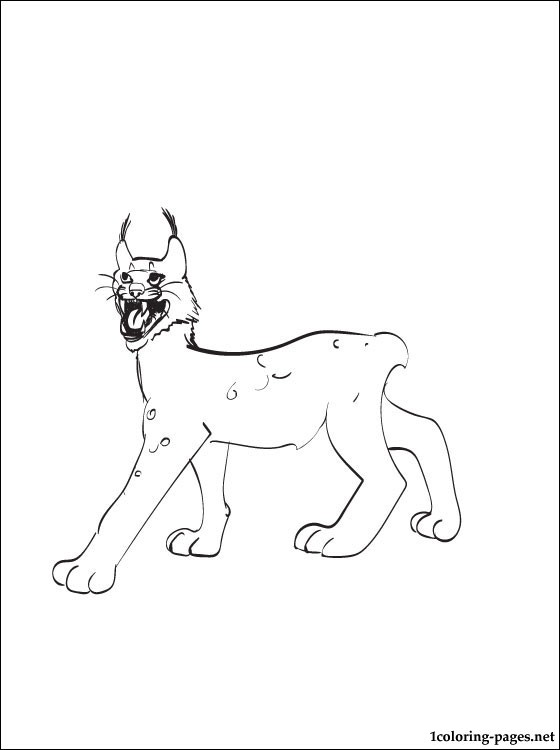 Lynx Printable And Coloring Page Coloring Pages