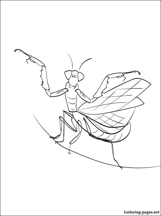 Mantis Coloring And Printable Page Coloring Pages