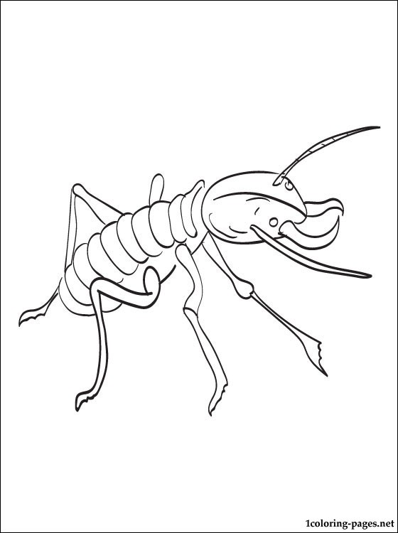 Termite Coloring Page To Print Out Coloring Pages