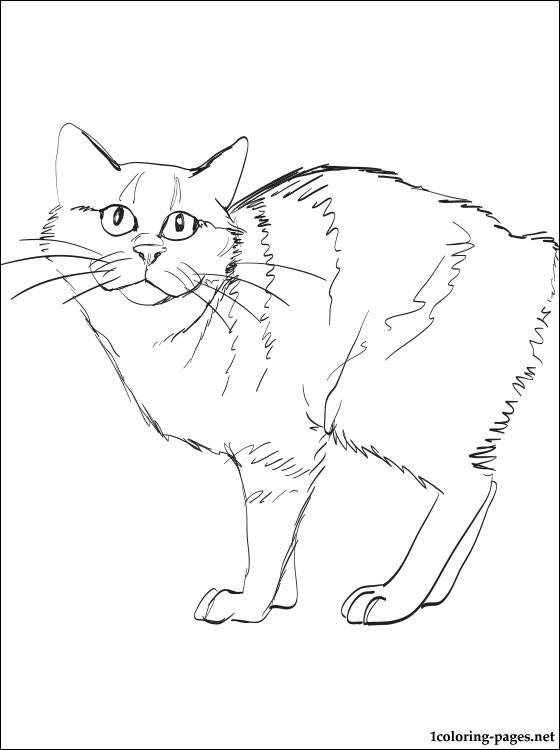 Manx Cat Coloring Page Coloring Pages
