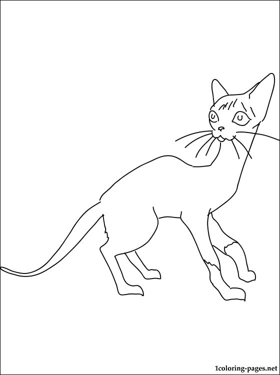 Siamese Cat Coloring Page Coloring Pages